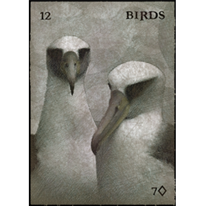 Albatross feature on the Bird card. Sailors have long held a deep superstition about these birds!